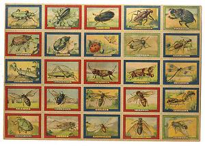 Jeu des insectes