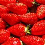Dessert en or : la FDJ ramène sa fraise